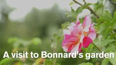 A visit to Pierre Bonnard's garden at Vernonnet