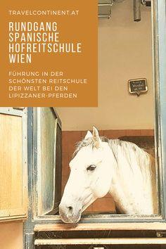 """Ein """"Must See"""" in #Wien, die weltberühmte Hofreitschule mit seinen Lipazzaner-Pferden. Tipps für eine Führung in Reitschule und Stallungen. #pferde #österreich #sehenswürdigkeiten Kaiser Karl, Horses, Animals, Renaissance Architecture, Horseback Riding, Tips, Animais, Animales, Animaux"""