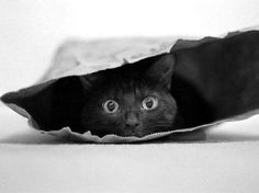 paper bag kitty