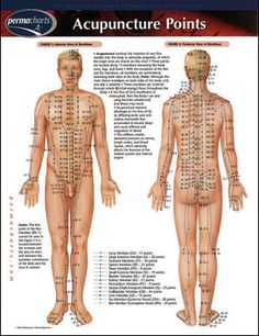 Acupuncture meridians (energetic highways) with acupuncture points (exits along the highways where blockages form that stop the flow of energy, chi).