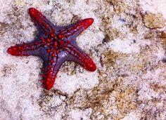 Sea Star in Zanzibar