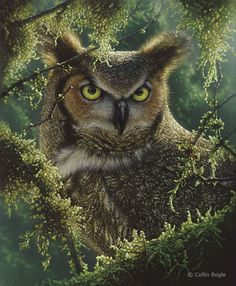 Wildlife Paintings, Wildlife Art Prints by Artist Collin Bogle