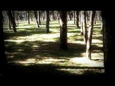 detoxication #1 | poison into cure - YouTube