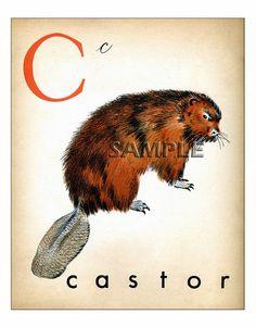 Vintage French Letter Print H C B F HedgeHog by ChildsTouch