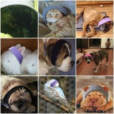 April Fools Day Jokes, National Pet Day, I Love Sleep, Sleeping Animals, The Fool, Products, April Fools, Gadget