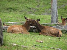 Animals in Love Photos