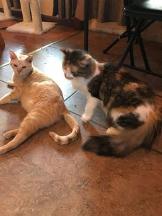 Save a life, adopt a cat. Here are my tips on adopting a rescue cat.