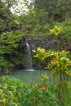 Maui, Hawaii, road to Hana
