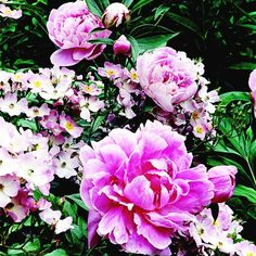 Grow Old-Fashioned Flowers  Cottage gardens aren't about new varieties. They're usually filled with the same traditional favorites your grandmother would have grown. Some popular examples include peony, cosmos, foxglove, snapdragon, pansy, bachelor's button, columbine, bleeding heart, and hollyhock.