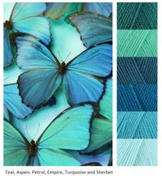 Color palette in blues and greens from butterflies
