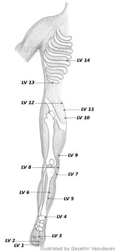 The technique of acupressure or acupoint massage requires a thorough knowledge of the pressure points that are present in our body. This article illustrates these various pressure points, in order to help you identify them better. Acupressure Points Chart, Reflexology Points, Acupressure Therapy, Acupressure Treatment, Massage Tips, Good Massage, Massage Techniques, Massage Therapy, Meridian Acupuncture