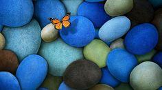 butterfly-nature-15.jpeg (1280×720)