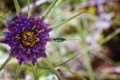 Facebook, Twitter, Colors, Nature, Flowers, Plants, Blog, Instagram, Colour