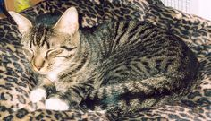 bengal tabby cat mix | Recent Photos The Commons Getty Collection Galleries World Map App ...