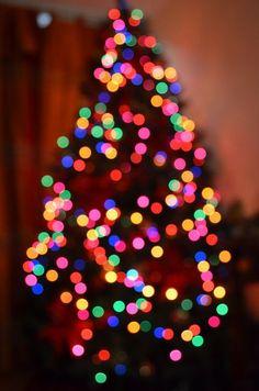 christmas / holiday / holidays / winter / tree / lights