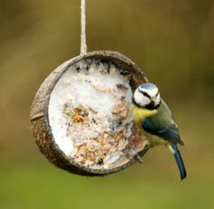 FEEDER: Ideas for Feeding Wild Birds - Feeders Made From Nature, including this coconut shell feeder; The Crafty Crow Bird Feeder Craft, Wild Bird Feeders, Wild Bird Food, Wild Birds, Diy Jardin, Bird Seed Ornaments, Orange Bird, Bird Crafts, Backyard Birds