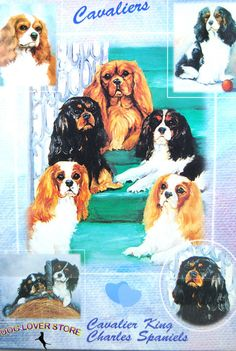 This beautiful Cavalier King Charles dog gift wrap will liven up any present! Each set of gift wrap includes two sheets of thick, quality wrapping paper measuring 20″ x 28″ and 2 gift cards. Glossy finish 2 gift cards included 2 sheets of 20″ x 28″ paper Beautiful collage print of your favorite dog breed