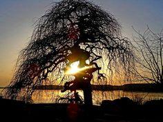 Sunset - Danube river - zoltán kovács - Google+
