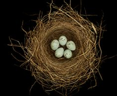 """Bird nests are symbols of home; they represent the love, commitment, and effort it takes to build a happy home. Bird nests are also good-luck symbols"