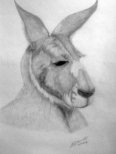 canguro - matita su cartoncino