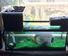 Windowsill Aquaponics System