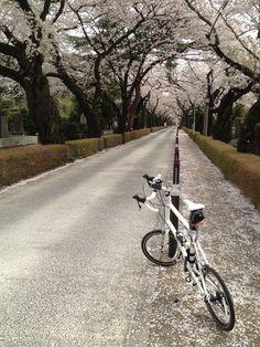 ©fukuchanさま / DASH x20 2013年 / 2013/3/29 東京都港区 iPhone4Sで撮影