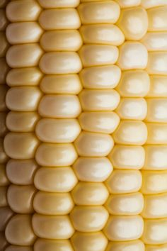 Close up of corn on