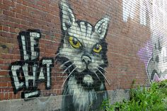 Street art ???????Le chat