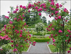 I Never Promised You A Rose Garden but wouldn't this be Divine!!! A Rose garden with various types and colors of roses made as the idea of making a garden, a harmonious arrangement.
