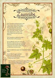 Zaunruebe Zaunruebe,Alte Kräuterbilder Zaunruebe Related posts:HD Back Massage Therapy Techniques with Oil, How to Give a Back Relaxing Back Ma. Diy Herb Garden, Edible Garden, Kitchen Herbs, Herbs Indoors, Greenhouse Gardening, Plant Illustration, Growing Herbs, Companion Planting, Medicinal Plants