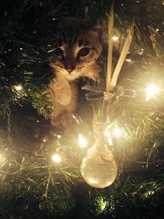 Is your cat ruining your Christmas?