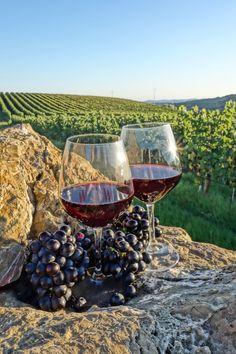 Wine Photoshoot