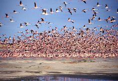 botswana landscapes - Google Search