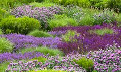 Lurie Garden - a reconstructed prairie meadow garden perennial tapestry at…