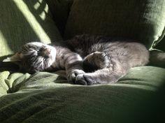 Ollie in het zonnetje, mijn gekke kat