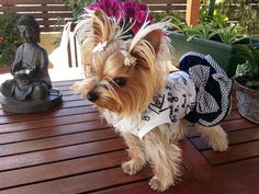 Yorkie Dogs, Yorkies, Yorkshire Terriers, Dog Lovers, Pets, Box, Animals, Snare Drum, Animales