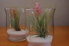 Air Plant Terrariums - Happiness is Homemade
