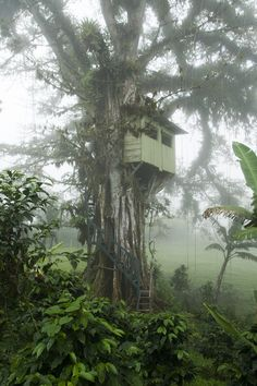 Looks like this tree-house almost organically attached itself to the tree