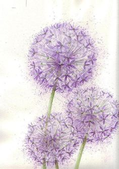 Alliums Floral Source by Watercolor Cards, Watercolor Flowers, Watercolor Paintings, Watercolor Tattoo, Art Floral, Floral Pins, Watercolour Tutorials, Pretty Wallpapers, Flower Wallpaper