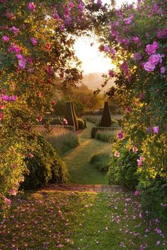 Dawn light on the parterre at Pettifers Garden in North Oxfordshire, England Clive Nichols Garden Photography Diy Garden, Dream Garden, Shade Garden, Garden Paths, Garden Ideas, Garden Archway, Garden Stairs, Garden Entrance, Garden Soil