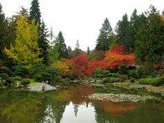 We're having a particularly beautiful autumn in the Pacific Northwest this year. Misty mornings burn off to luminous late afternoon sunshi. Seattle Japanese Garden, Pacific Northwest, Bouldering, Seasons, Spaces, Fall, Water, Outdoor, Beautiful