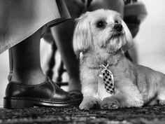 Cachorros no ambiente de trabalho diminuem o stress dos funcionários
