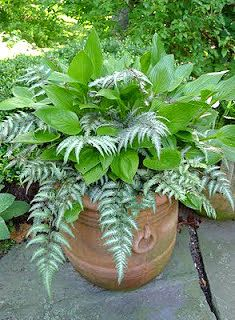 COMBO: Japanese painted fern & hosta Follow Fernwood for other combos like this!