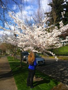 Brook taking time to smell the cherry blossoms in a Portland Spring