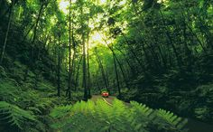 Fern Gully, Jamaica. I have driven through this amazing canopy of nature.  Just gorgeous.