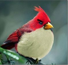 Real Angry Bird | You Must Check This Out