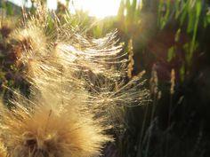 Centi bastelt: Ein Tag Sommer