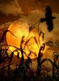 Iowa corn in a full moon