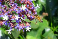 flowers and insects Bees flowers, nature and beauty flowers