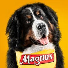 #NEW #iOS #APP Magnus Premium - Facens